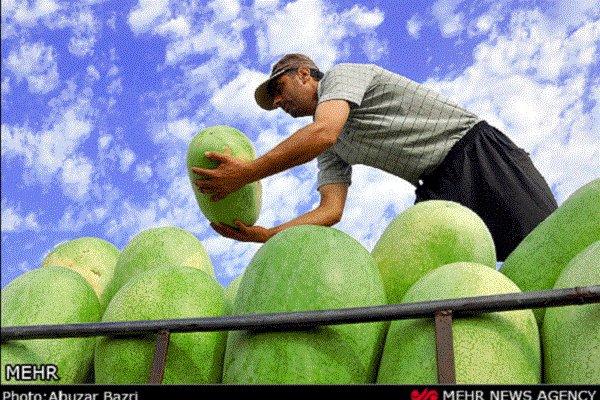 رشد ده درصدی برداشت هندوانه از مزارع گیلان